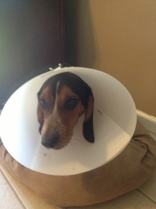 Jackson in the CONE